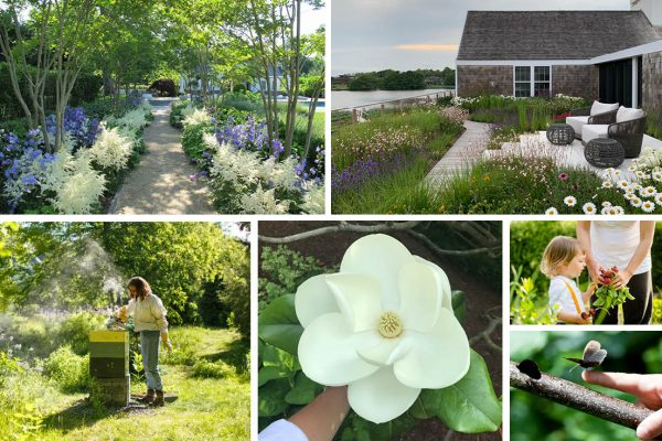 How to Plant for Pollinators: Planning a Biodiverse Garden for 2021